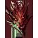:dragonfg2: