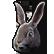 :medidynasty_rabbit: