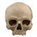 :CatacombSkull: