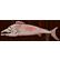 :salmon: