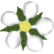 :flower_timen: