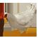 :yaga_chicken: